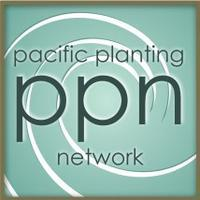 Pacific Planter's Cluster - San Francisco