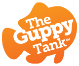 Guppy Tank pre-event!! – How to Pitch to Investors