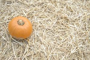 Pumpkins! Carving Demonstration, tips and tricks