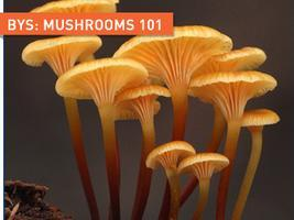 Backyard Skills: Mushrooms 101
