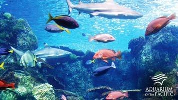 PBS SoCaL Members-Only Night at the Aquarium
