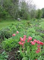 Introduction to and Design of Perennial Gardens.