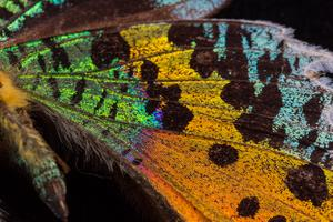 Insect Pinning Workshop - Wednesday 7, 12:00 until 1:00pm