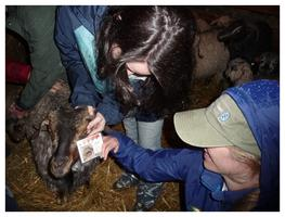 FAMACHA Certification & Parasite Management in Small...