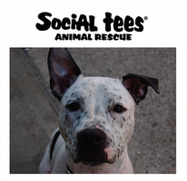 Be Social... for Social Tees Animal Rescue!