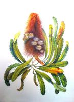 COLORED PENCIL TECHNIQUES for Botanical Illustration...