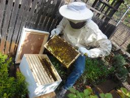 Acta Non Verba's Bee Keeping Workshop, Benefit and...