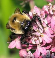 Food and Pollinators Family Day