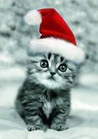 IT'S CHRISTMAS IN JULY! KITTY ADOPTION EVENT!