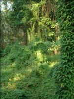 Invasive Plants Commonly Used: Landscapers Guide,...