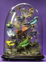 A Victorian Obsession: The Natural World Under Glass
