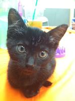 Howl-O-Ween Kitty Adoption Event!