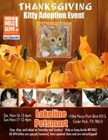 Give Thanks for Cats and kittens adoption event!
