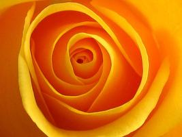 YES! Symposium 2014 - The Yellow-rose Earthhealers &...
