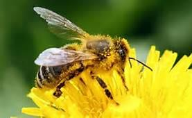 Beekeeping 101 - Open and Space Available- Please see...
