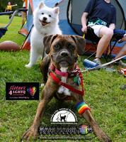 Windy City Animal Foundation & Sisters 4LGBTQ: The 2nd...