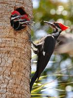 Creature Feature: Woodpeckers!