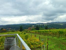 Raptor Ridge Winery with Winemaker Kevin Wiles