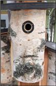 Workshop: Making Birch Birdhouses