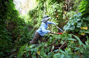 Friends of Brooker Creek Return the Preserve Work Day