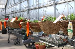 Plant Your Own Hanging Basket (Thursday, Feb 13,...