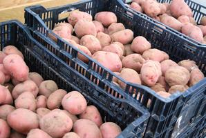 Potatoes, Onions, and Other Edibles (Thursday Feb 20,...