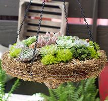 Container Gardening with Rex and Lisa