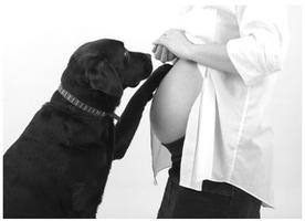 Expectant Parents with Dogs | Jul 16
