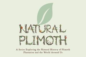 Natural Plimoth Series: Embracing the Homegrown:...