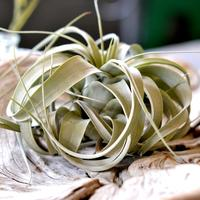 Air Plants - The Sky's the Limit (Tuesday, May 6,...