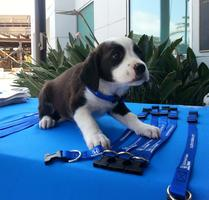 Helpful Honda Pet Adoption with GreenDog Foundation at...