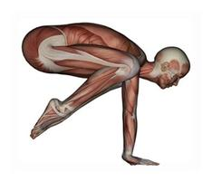 Enhanced Anatomy & Physiology Half Moon Yoga Teacher...