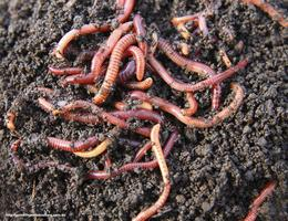Wonderful World of Worms