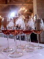 Rambling Rosé at Becker Vineyards