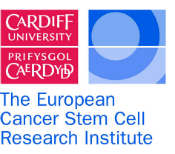 The European Cancer Stem Cell Institute: Research...