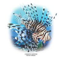 2nd Annual Northeast Florida Lionfish Rodeo