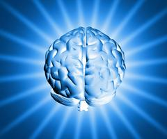 Feed Your Brain: Nutrition for Concentration and Focus