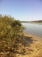 Living with Mangroves