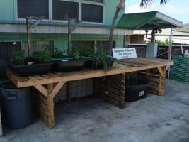 Aquaponics Oahu Garden (Palolo Valley) OPEN HOUSE TOUR