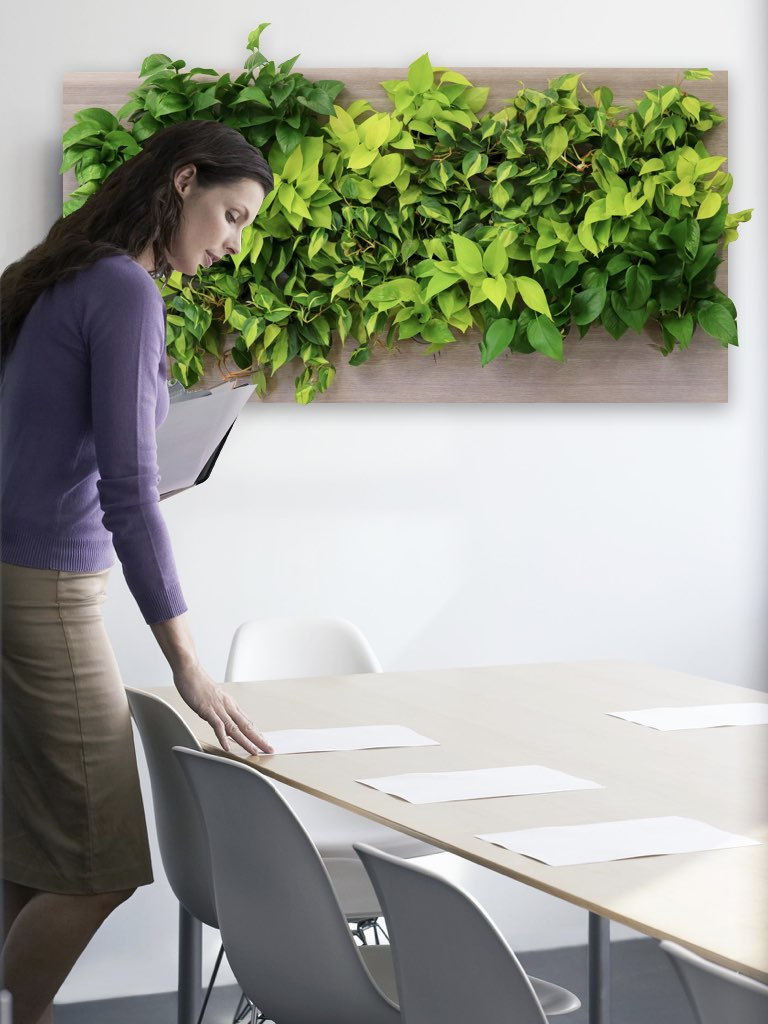 Woman at Desk Biome