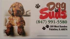 Dog in Suds Palatine Illinois