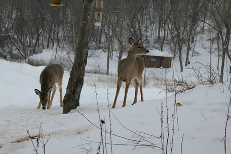 Deer grazing at Christ In The Wilderness retreat