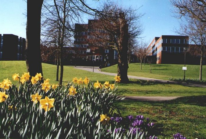 Sussex campus image with daffodils