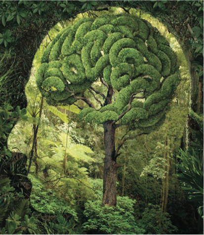 Tree shaped as a brain in a forest environment
