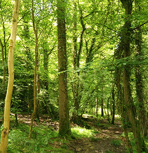 Image of Pipley Wood