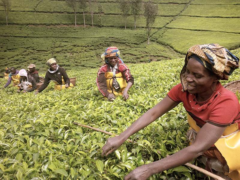 Workers a the Kitabi Tea Estate