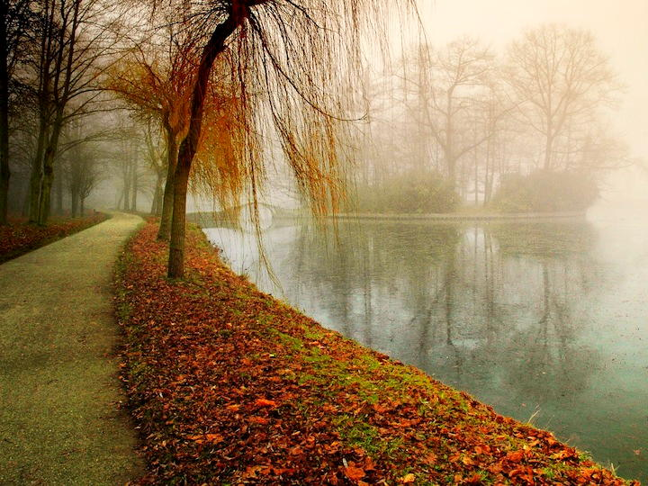 Leafy Path with Misty Lake Image