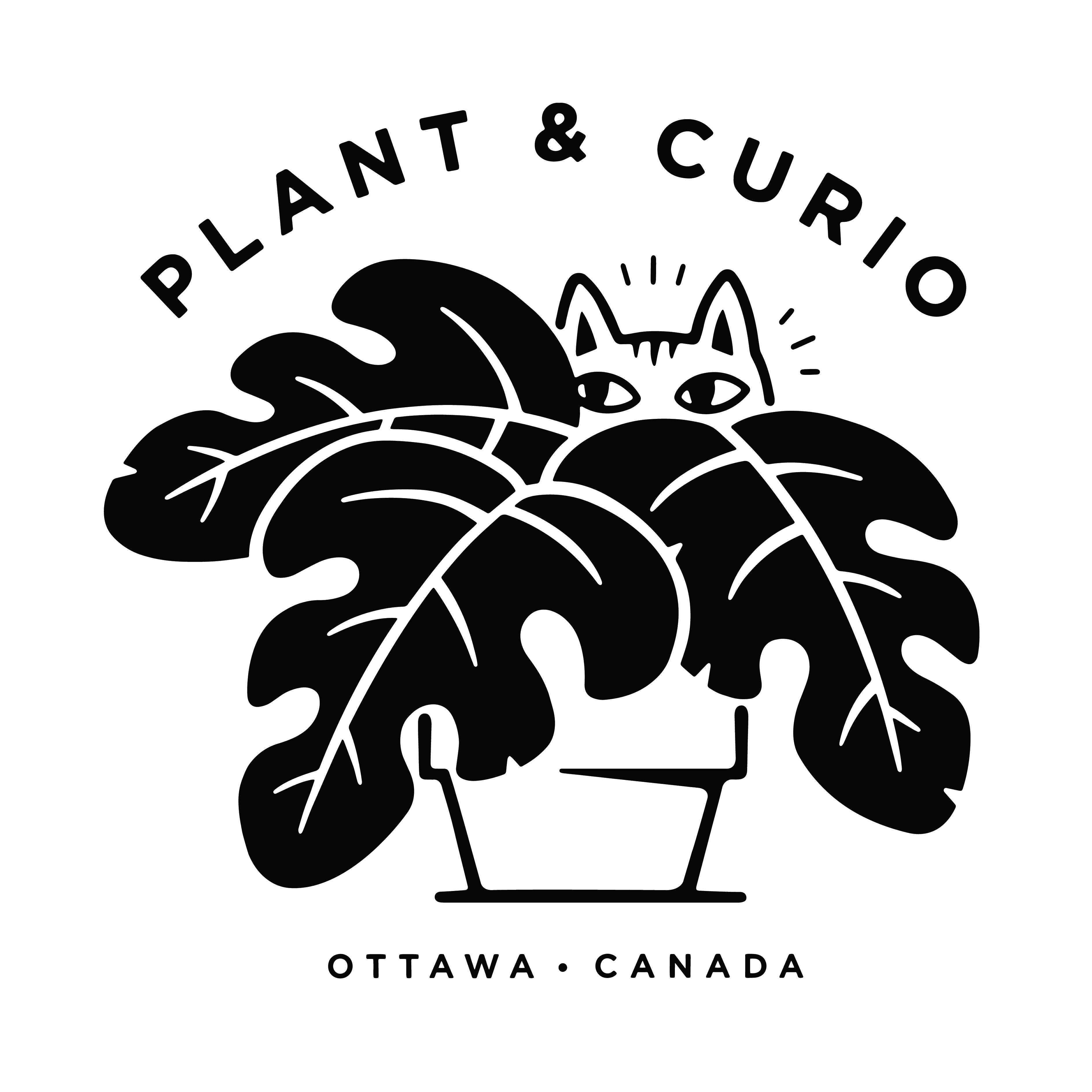 Plant & Curio logo with cat peeking out from behind house plant.