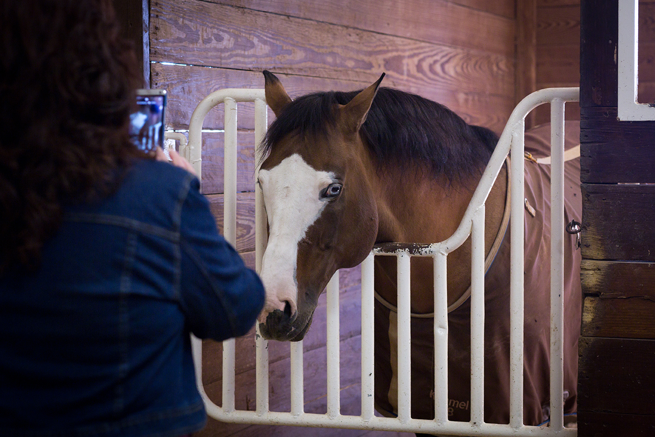 Get up close and personal on the North Texas Horse Country Tours.