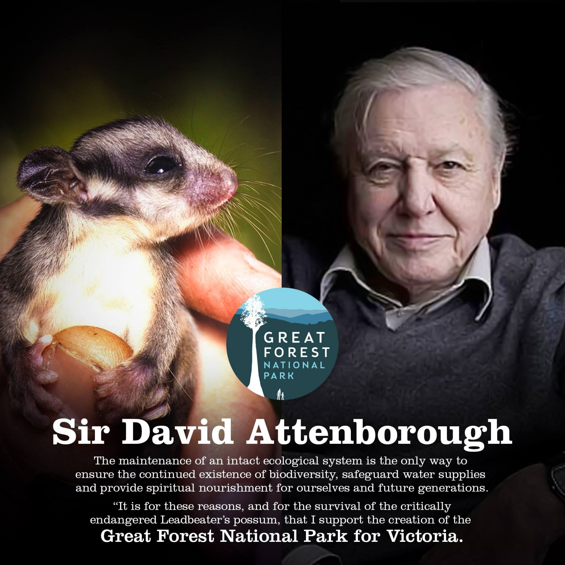 David Attenborough supports creating the Great Forest National Park